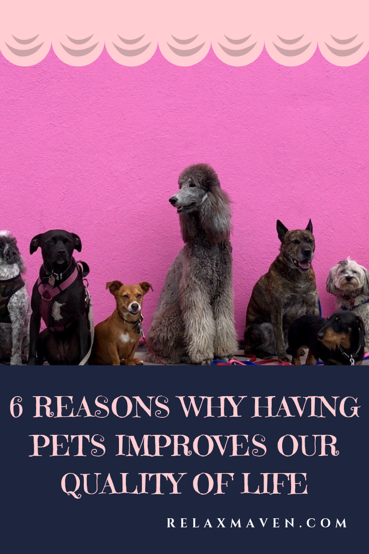 6 Reasons Why Having Pets Improves Our Quality of Life