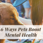 6 Ways Pets Boost Mental Health