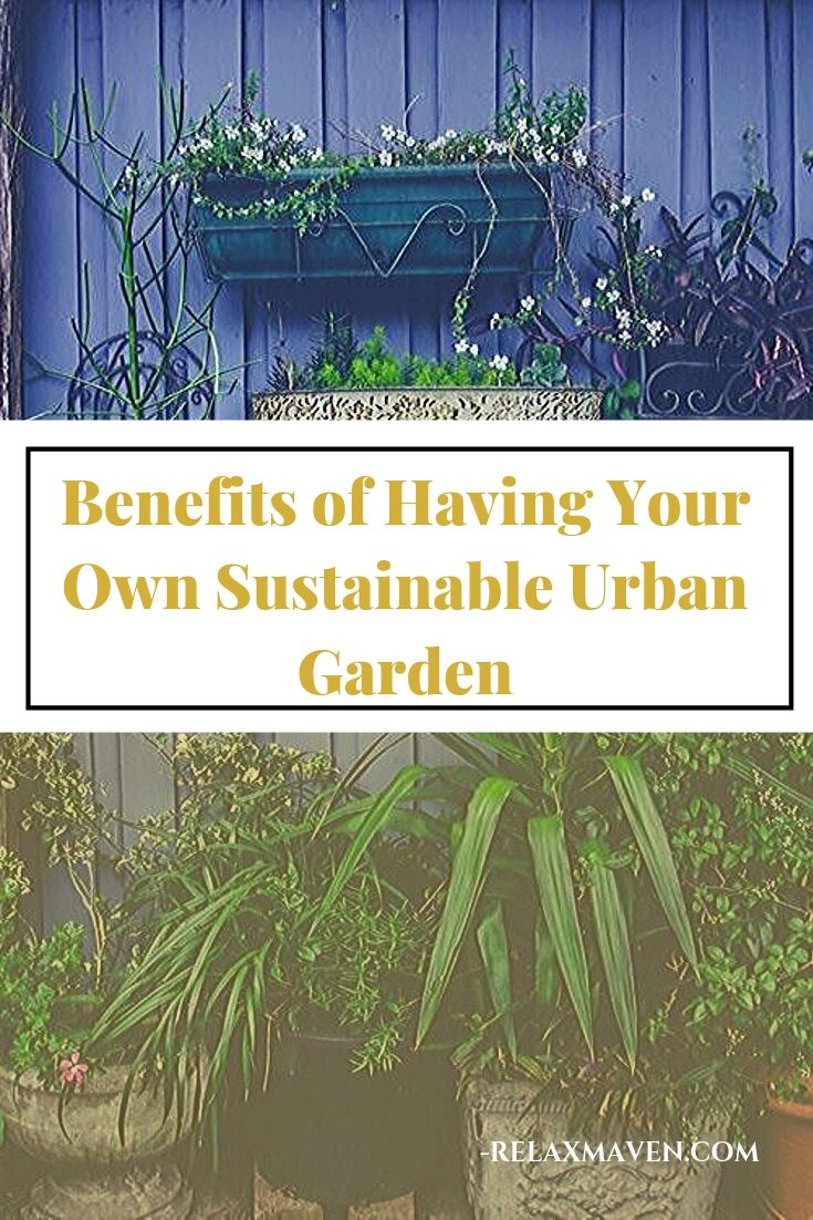 Benefits of Having Your Own Sustainable Urban Garden (Plus DIY Tips!)