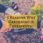 5 Reasons Why Gardening is Therapeutic
